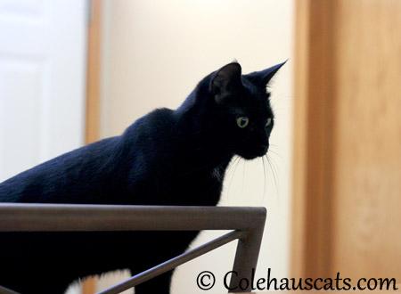 But I'M the BAAAAY-BEEEE! - 2013 © Colehaus Cats