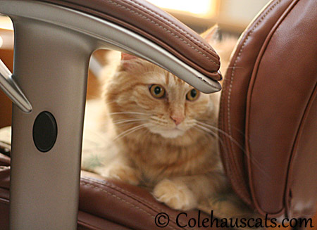 But I'M the Ginger Princess! - 2013 © Colehaus Cats