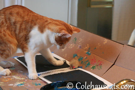 Quint gets the feel for painting on black - 2013 © Colehaus Cats