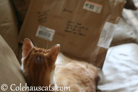 Quint gets a package! - 2013 © Colehaus Cats