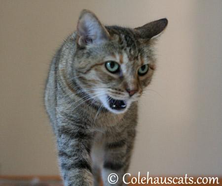 Hear ye! Hear ye! Here be babies! - 2013 © Colehaus Cats