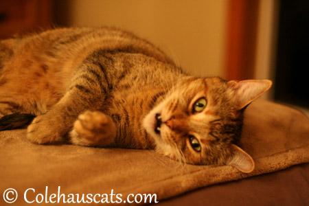 Ruby asks... - 2013 © Colehaus Cats