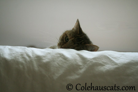 Watching baby Niblets - 2013 © Colehaus Cats