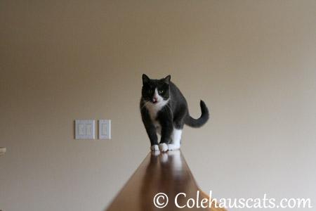 Oh, Mancats! - 2013 © Colehaus Cats