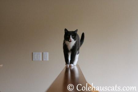 I hear how brave Mancats are - 2013 © Colehaus Cats