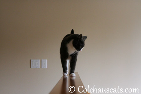 ...and raise you looking over the big edge - 2013 © Colehaus Cats