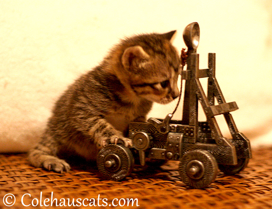 Viola rolls out the trebuchet - 2013 © Colehaus Cats