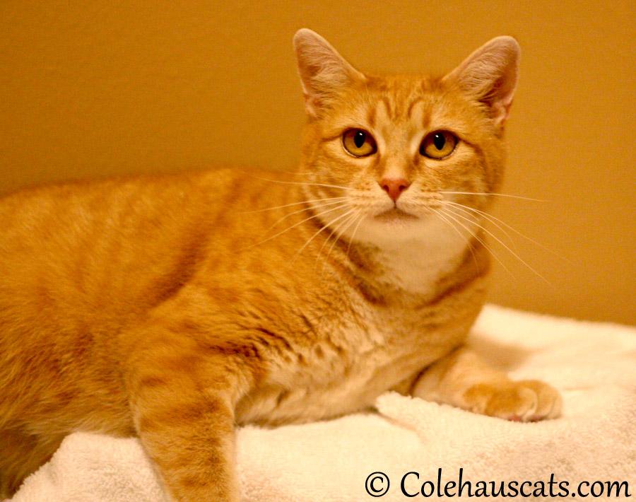 Foster mama Erinn Zuzu - 2013 © Colehaus Cats