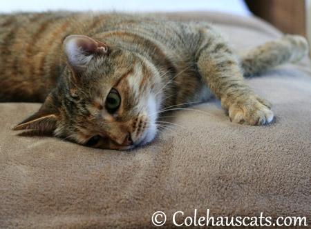 Mmm, fleece - 2013 © Colehaus Cats