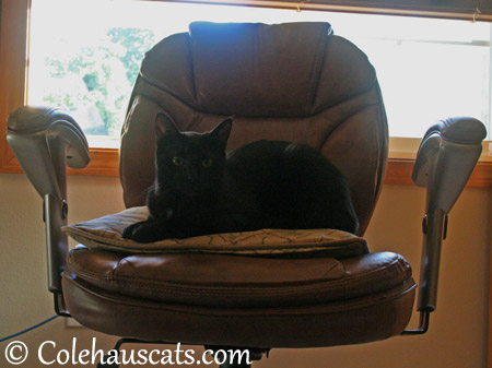 Olivia's Seat of Power - 2013 © Colehaus Cats