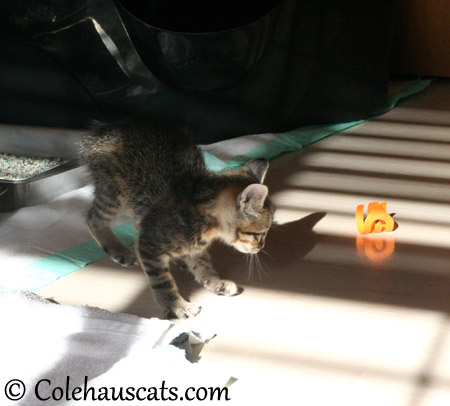 Viola's Favorite Squiggle toy - 2013 © Colehaus Cats
