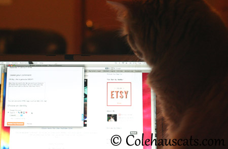 Getting right to work - 2013 © Colehaus Cats