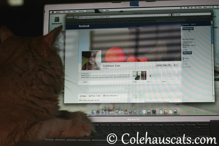 Working Facebook - 2013 © Colehaus Cats