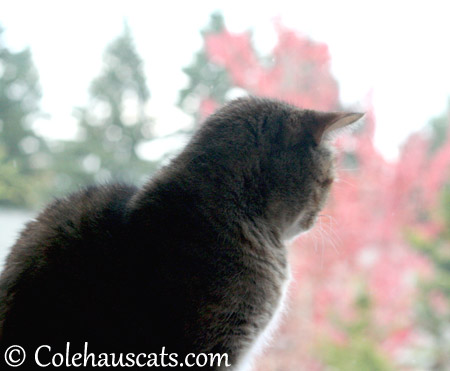 Watching fall leaves - 2013 © Colehaus Cats