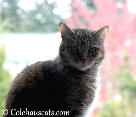 Not as pretty as me - 2013 © Colehaus Cats