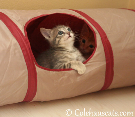 Sailing the Crinkly Time Tunnel of Fun - 2013 © Colehaus Cats