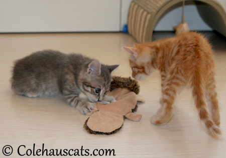 Sharing toys? - 2013 © Colehaus Cats