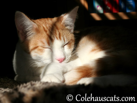 Quint in the morning - 2013 © Colehaus Cats