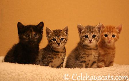 The Niblets, November 5, 2013 - 2013 © Colehaus Cats