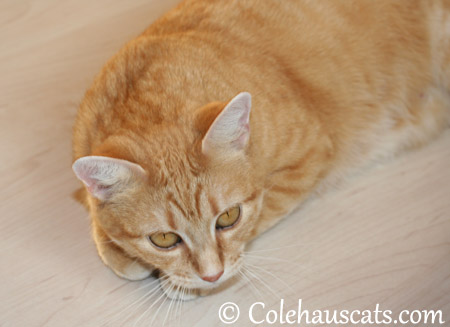 Pondering her future - 2013 © Colehaus Cats
