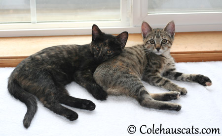Illy and Viola pose together one last time - 2013 © Colehaus Cats