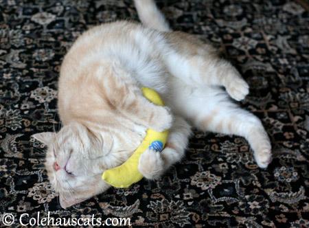 Miss Newton LOVES the Nip Naner - 2013 © Colehaus Cats