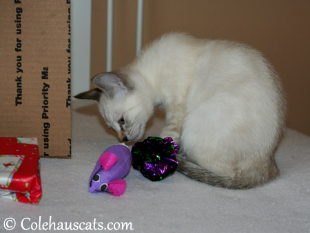 While Winter inspects a mousie and favorite crinkle ball - 2013 © Colehaus Cats