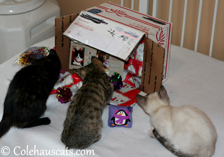 Niblets with Santa Paws presents - 2013 © Colehaus Cats