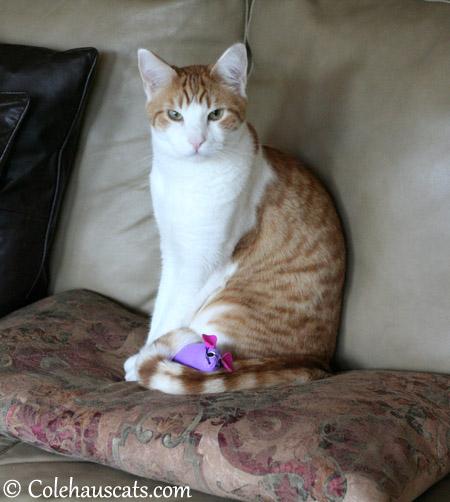 Quint claims the purple mousie - 2013 © Colehaus Cats