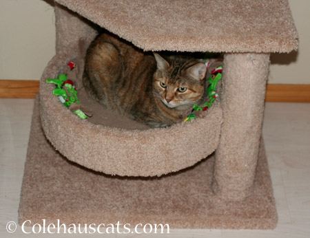 Ruby and her tower - 2014 © Colehaus Cats