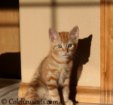 Russell is a sun lover - 2013 © Colehaus Cats