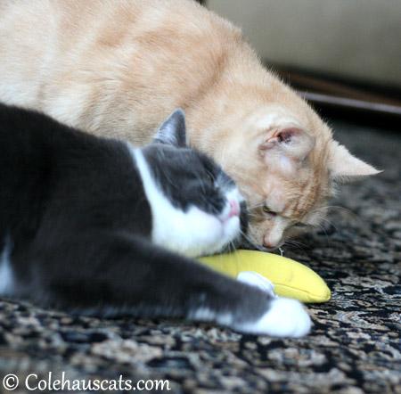 Tessa shares the Nip Naner - 2013 © Colehaus Cats