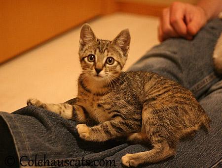Viola loves jeans - 2013 © Colehaus Cats