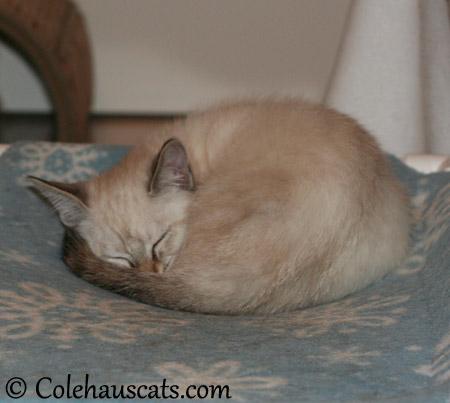 A Winter's nap - 2013 © Colehaus Cats