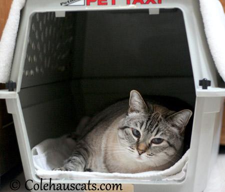 Maxx complains about drab crates - 2013 © Colehaus Cats