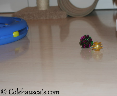 Not even the toys were impressed - 2013 © Colehaus Cats