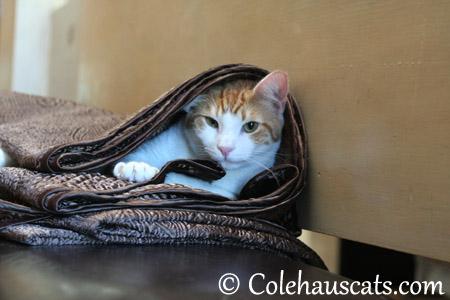 Morning Quint - 2013 © Colehaus Cats