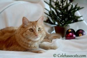 Pia's Christmas card - 2013 © Colehaus Cats