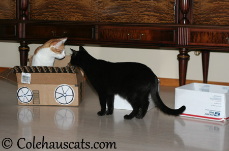 Quint and Olivia say... - 2013 © Colehaus Cats