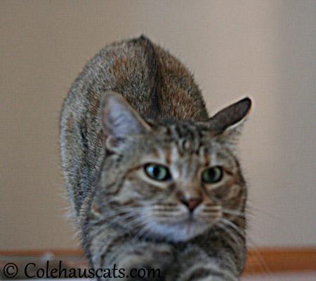Ruby's complaint - 2013 © Colehaus Cats