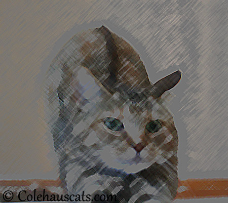 Ruby's complaint fixed - 2013 © Colehaus Cats