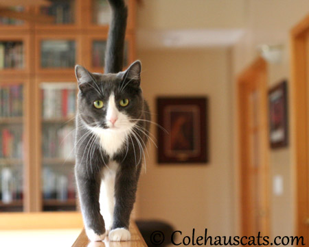 Tessa doesn't like cleaniness - 2013 © Colehaus Cats
