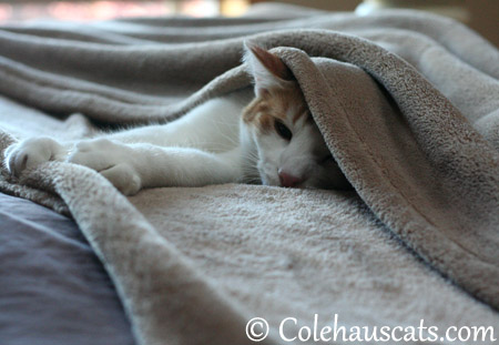 The tired little painter - 2013 © Colehaus Cats