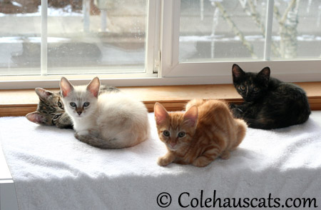 The temporary boarder, Winter - 2013 © Colehaus Cats
