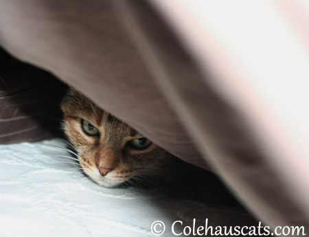Is it snowing yet? - 2013 © Colehaus Cats