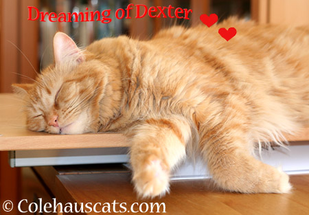 Dreaming of D - 2014 © Colehaus Cats