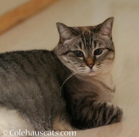 Clean Maxx - 2014 © Colehaus Cats