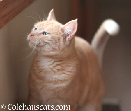 More photos of Miss Newton? - 2014 © Colehaus Cats