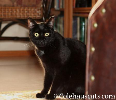 Whoa! - 2014 © Colehaus Cats