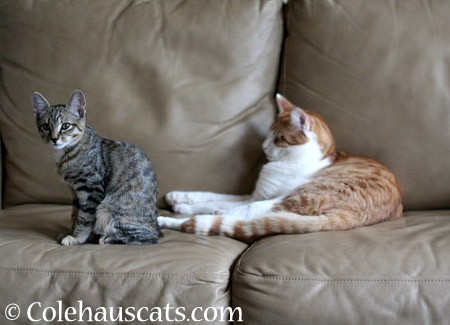 Settling down - 2014 © Colehaus Cats